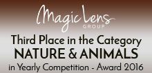 premio-magic-lens-tagg-photography